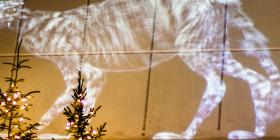 Jólakötturinn – die Weihnachtskatze